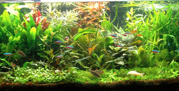 aquascape (2)