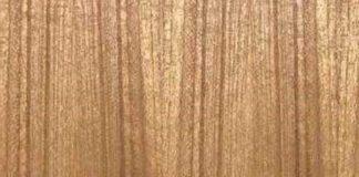 veneer kayu sungkai